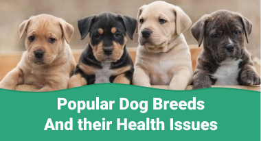 Popular Dog Breeds and their Health Issues - GreatVet