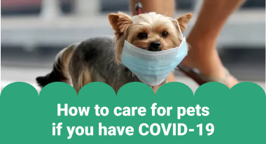 How to Care for Pets if You Have COVID-19 - GreatVet