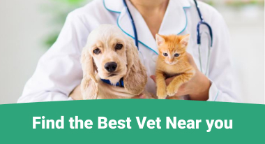 Find the Best Vet Near You - GreatVet