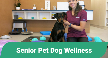 Senior Pet Dog Wellness