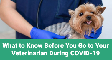 What to Know Before You Go to Your Veterinarian During COVID-19