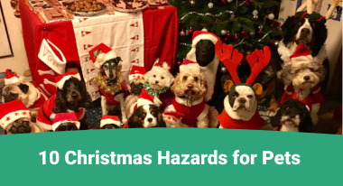 10 Christmas Hazards for Pets - GreatVet