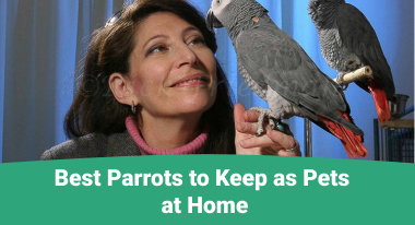 Best Parrots to Keep as Pets at Home - GreatVet