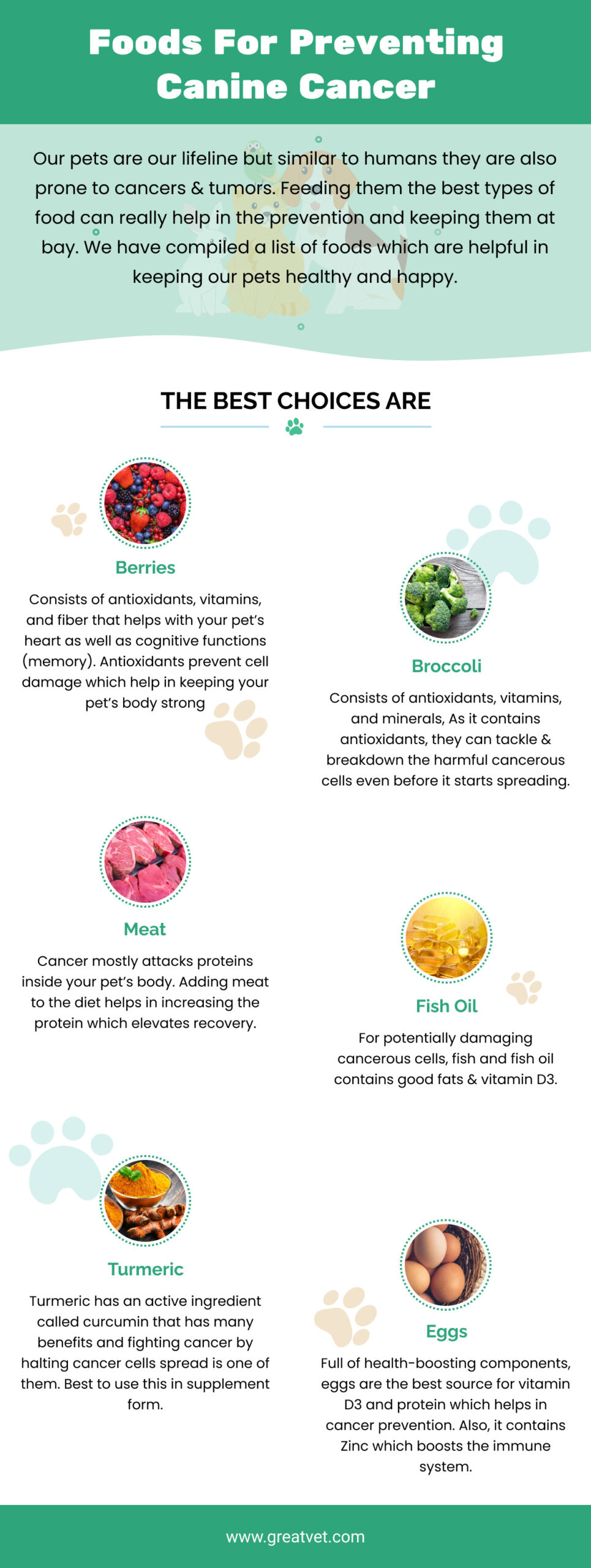 Foods For Preventing Canine Cancer - GreatVet