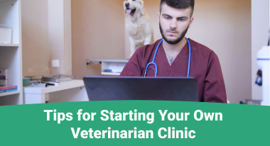 Tips for Starting Your Own Veterinarian Clinic - GreatVet
