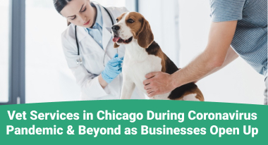 Vet Services in Chicago During Coronavirus Pandemic - GreatVet