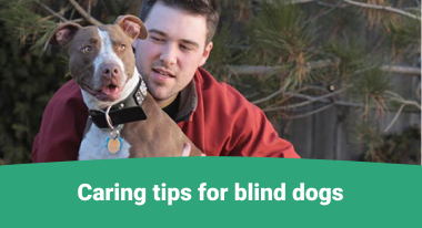 Caring tips for blind dogs - GreatVet