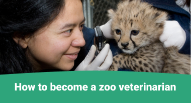 How to become a zoo veterinarian - GreatVet